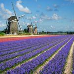 Xin visa Hà Lan có khó không?