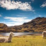 Điều kiện xin visa Ecuador
